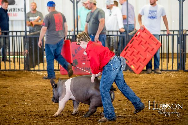 Div 07 Hog Showmanship
