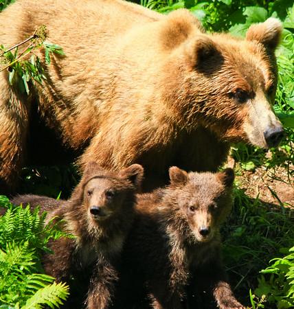 Wolverine Creek, Big River Lakes - Bear Viewing and Sockeye Salmon Fishing