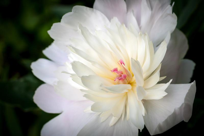 white flower 4x6.jpg