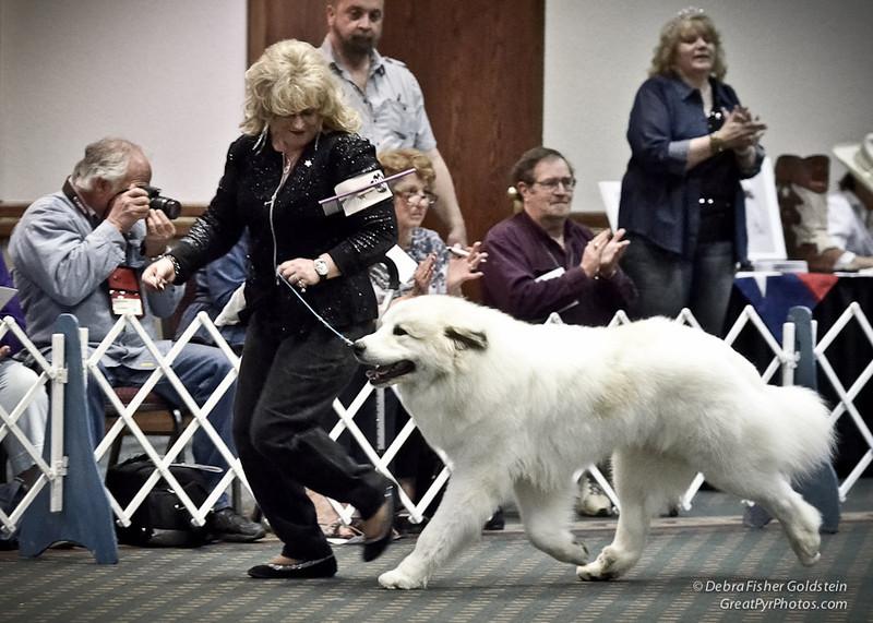 Puppy Invitational © Debra Fisher Goldstein 2013 GPCA National - 4262