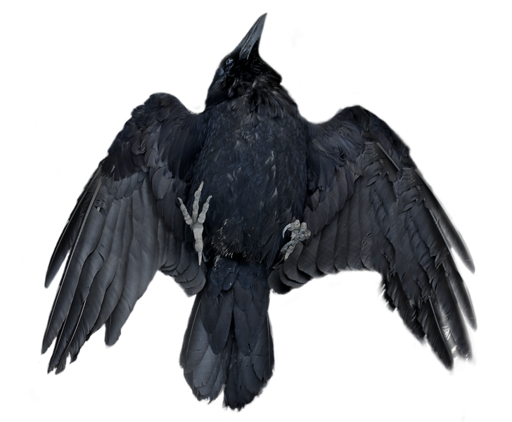 Raven 14.png