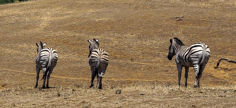 07-05-2021 Winston Wildlife Safari-17.jpg