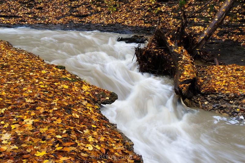 Fall-Run-Park-9273.jpg