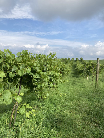 2020-09-02 Winzerwald Winery