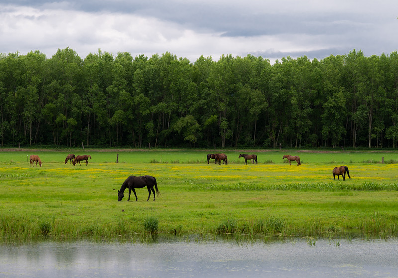 06-20-2020-horses.jpg