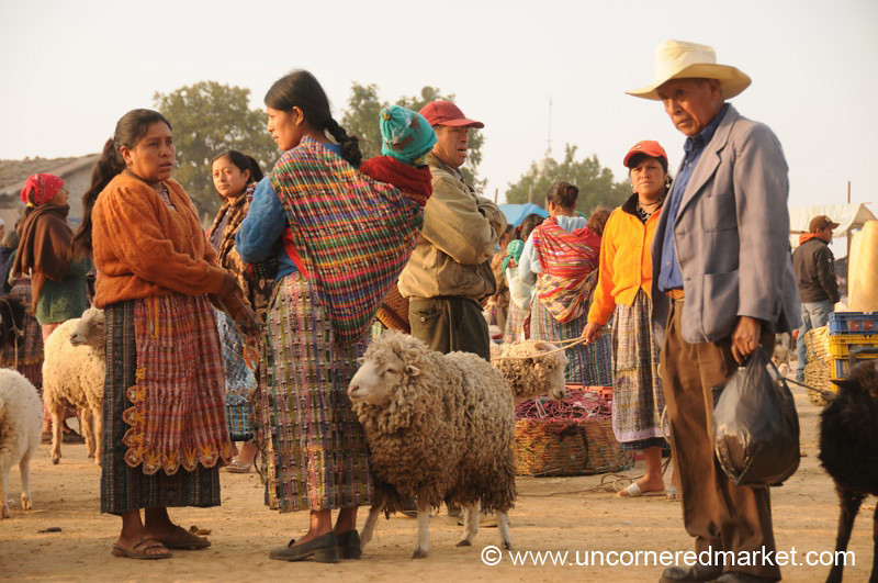 San Francisco El Alto Animal Market, Sheep for Sale - Guatemala