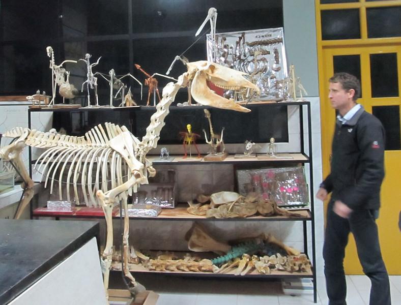 Anatomy Museum & AK San Marcos University Lima.jpg