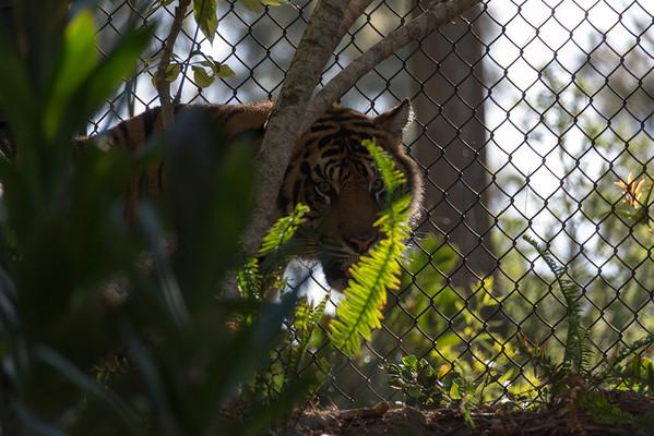2014-05-31 San Diego Safari Park
