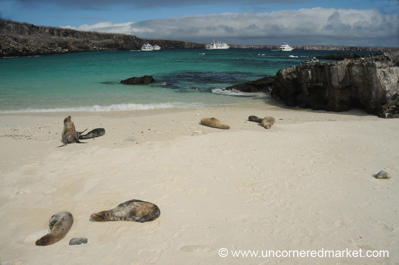 Late Afternoon Napping - Galapagos Islands