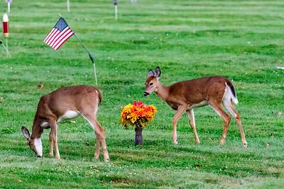 10/06/17 Deer