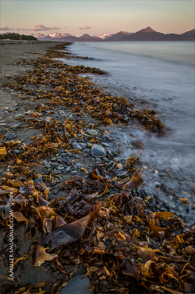 Kelpline at Kachemak Bay near Homer, Alaska. A 10-stop neutral density creates the ethereal appearance of the water. The heavy deposits of kelp were due to a very forceful wind storm the day before.