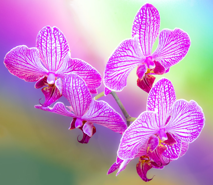 orchid 2020 (2 of 4).jpg