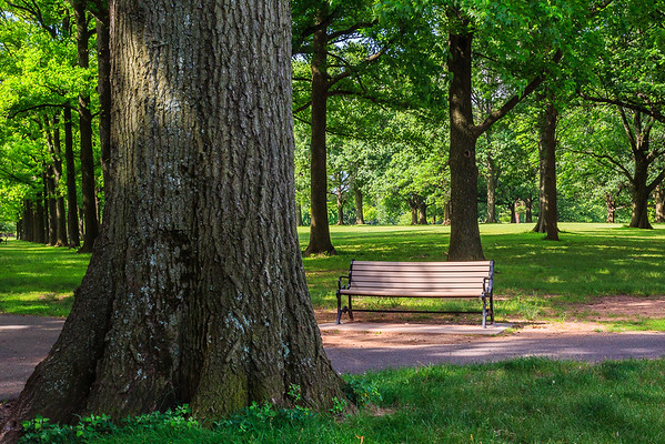 The Tree & The Bench
