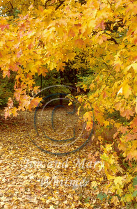 Trees_035