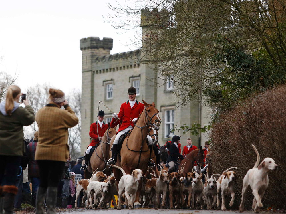 Description of . Members of the Old Surrey Burstow and West Kent Hunt depart from Chiddingstone Castle for the annual Boxing Day hunt in Chiddingstone, south east England December 26, 2012. A ban imposed seven years ago states that foxes can be killed by a bird of prey or shot but not hunted by dogs. Hunts continue nowadays with pursuers accompanying dogs in chasing down a pre-laid scented trail.  REUTERS/Luke MacGregor