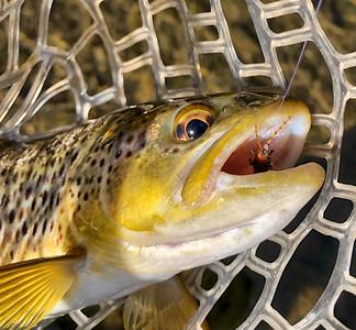 2021 trout season