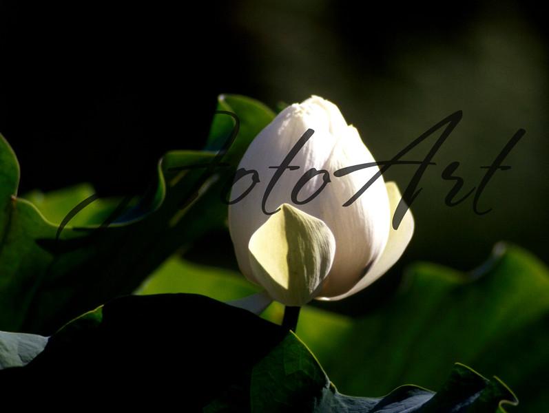 white flower  2 799.jpg