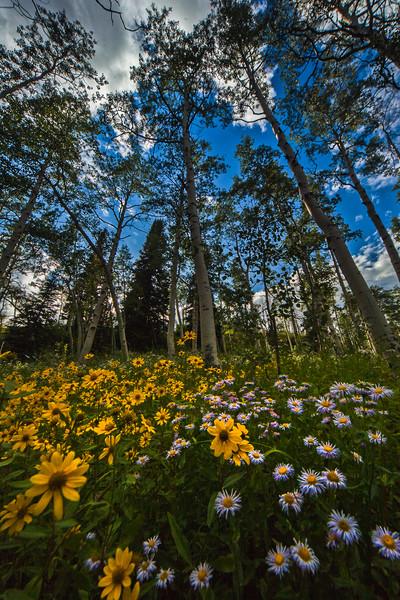tmophoto_transfer trail wildflower sunset.jpg