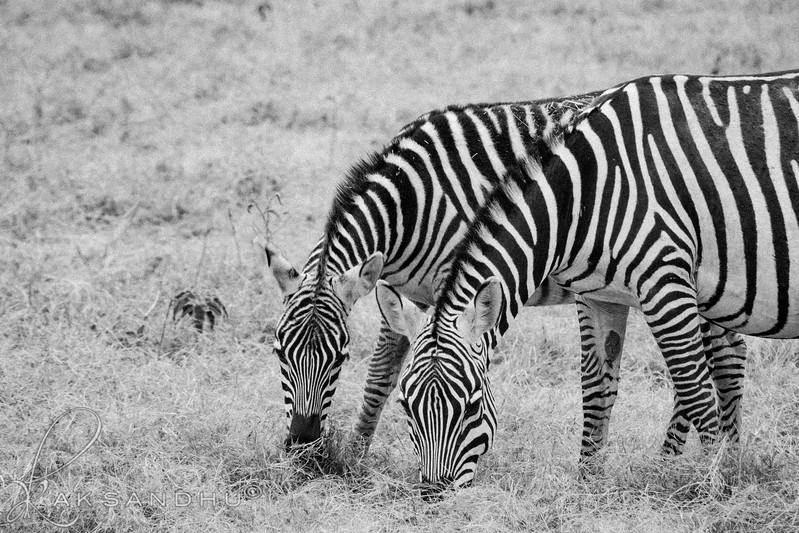 Safari-2ofaKind-007.jpg