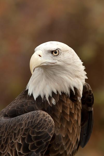 126.Lynn Nunn.2.Bald Eagle.jpg