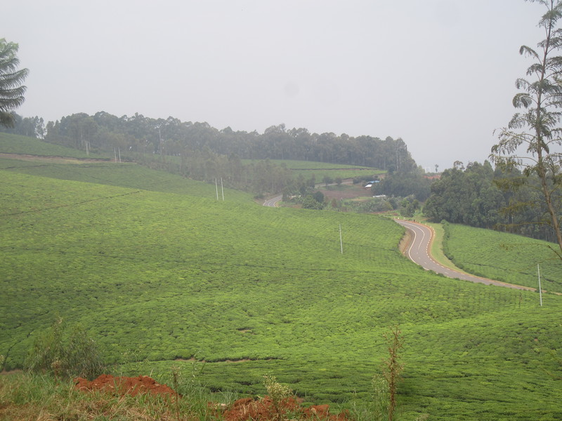 026_Rusizi. Tea Fields.JPG