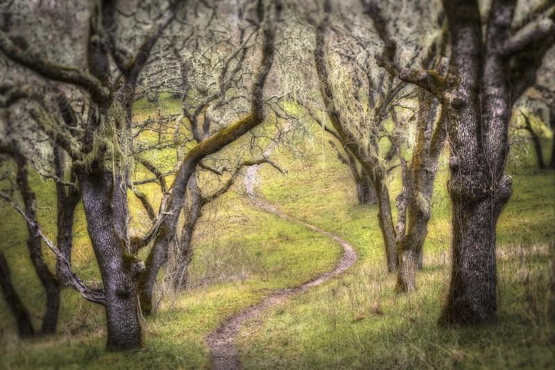 The Path, Sonoma Valley, California