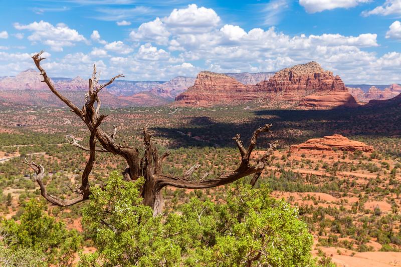AZ_Sedona_Tree_Mountain-2.jpg