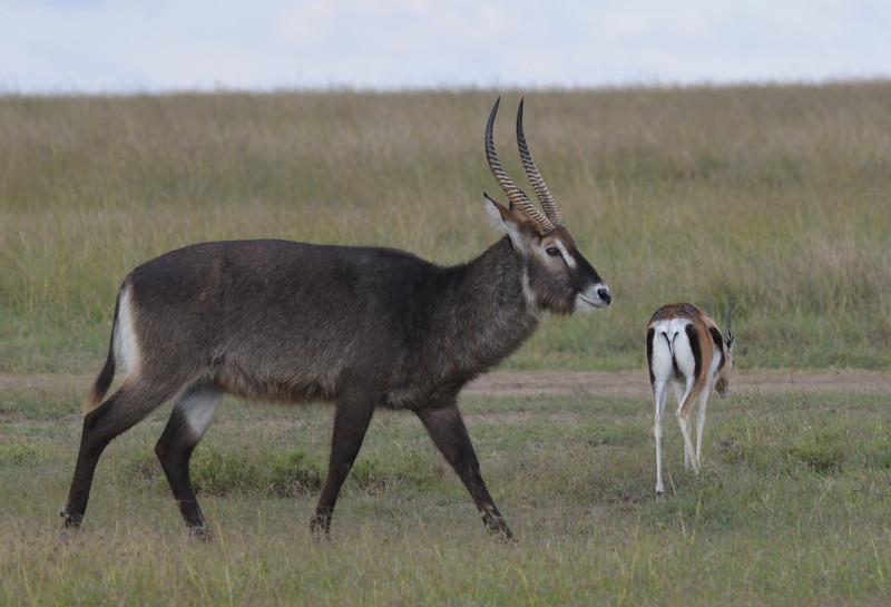 East Africa Safari 34.jpg