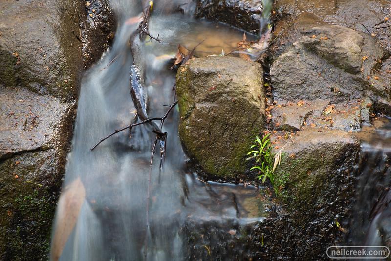 creek151010-029.jpg