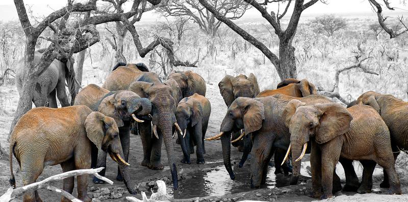 20110816_Tanzania_4696b1.JPG