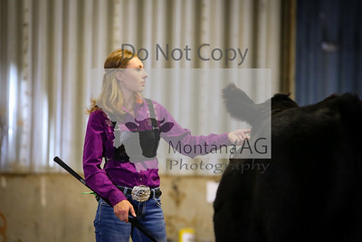 2019 Montana Jr Beef Expo