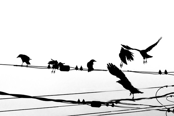 February 3 - Birds on a wire.jpg