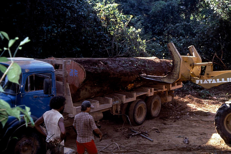 Amazon forest being cleared using bulldozer to make roads. Smuggling of trees and other herbal plant has been a key fact for deforestration. Kayapo, Brazilain Amazon.
