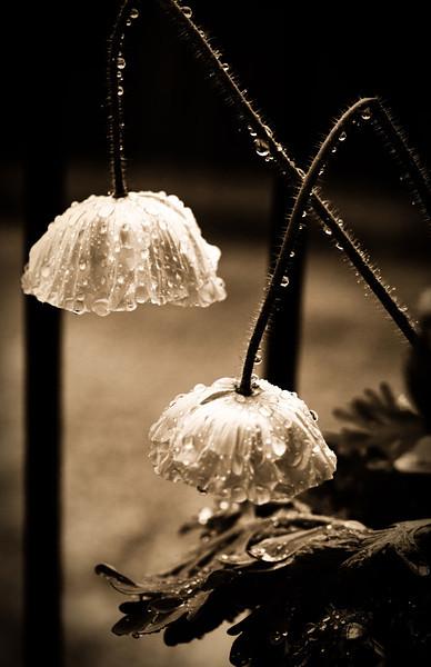 Poppies-.jpg