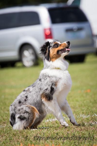 _MG_2876Up_dog_International_2016_StephaniellenPhotography.jpg
