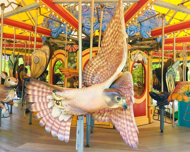 Carousel Hawk.JPG