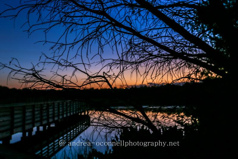 sunset thru trees.jpg