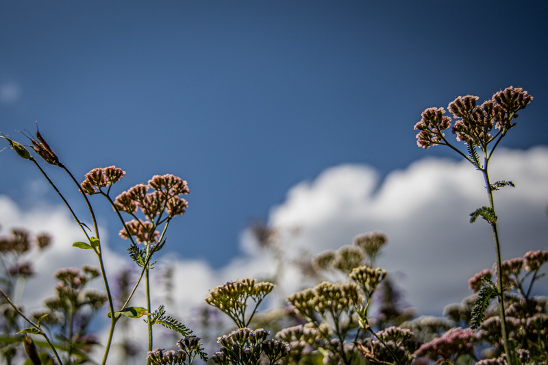August 27 - Sky, clouds and some flowers-1.jpg
