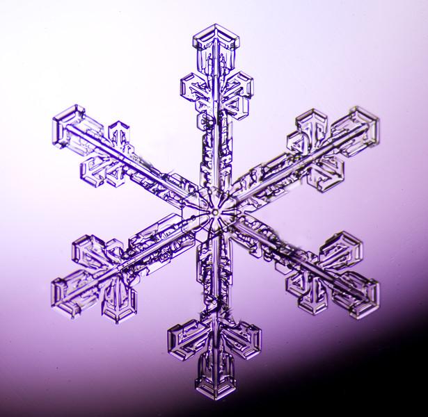 Snowflake-0685-Edit.jpg