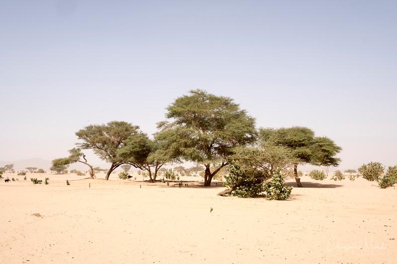 2-3-17228974Meroe-Bayuda Desert-Karima.jpg