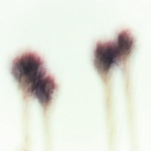 plants - impressions