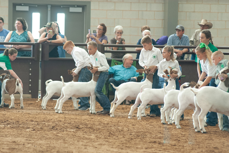 Tulsa_2019_goat_wether_showmanship-24.jpg