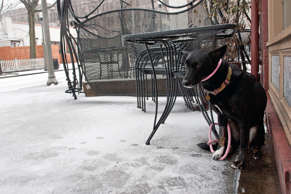 . A dog sits on an icy sidewalk in Decatur, ga. on Feb. 12, 2014. Icy and snowy road conditions caused some businesses and schools to shut down in the greater metro Atlanta region. (AP Photo/ Ron Harris)