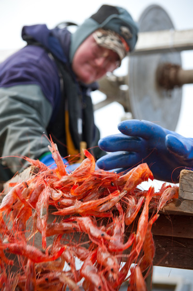 12. Shrimping with Proctor Wells, Gulf of Maine, February 2013.