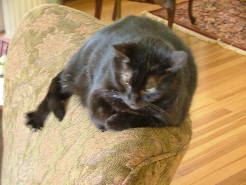 chair cat