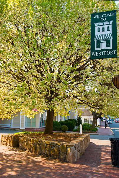 Spring Westport_15.jpg