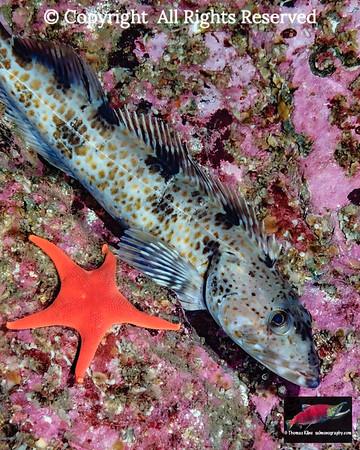 Sub-Arctic fishes
