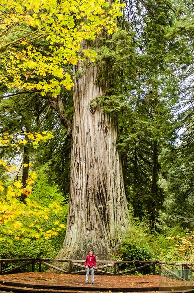 20141015_Redwoods_0073.jpg