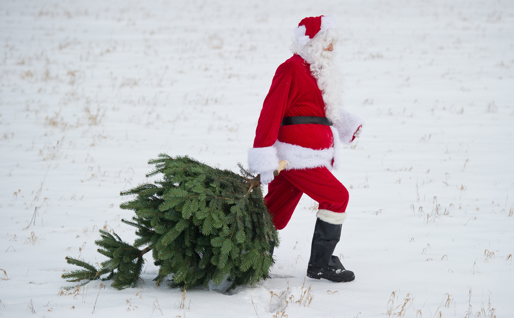 Description of . A Santa Claus pulls a Christmas tree on December 12, 2012 in Mellensee, eastern Germany.  PATRICK PLEUL/AFP/Getty Images