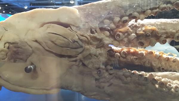 Body Worlds - Animal Exhibit